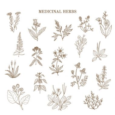 Vintage collection of medical herbs