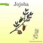 Jojobového větev s ovocem
