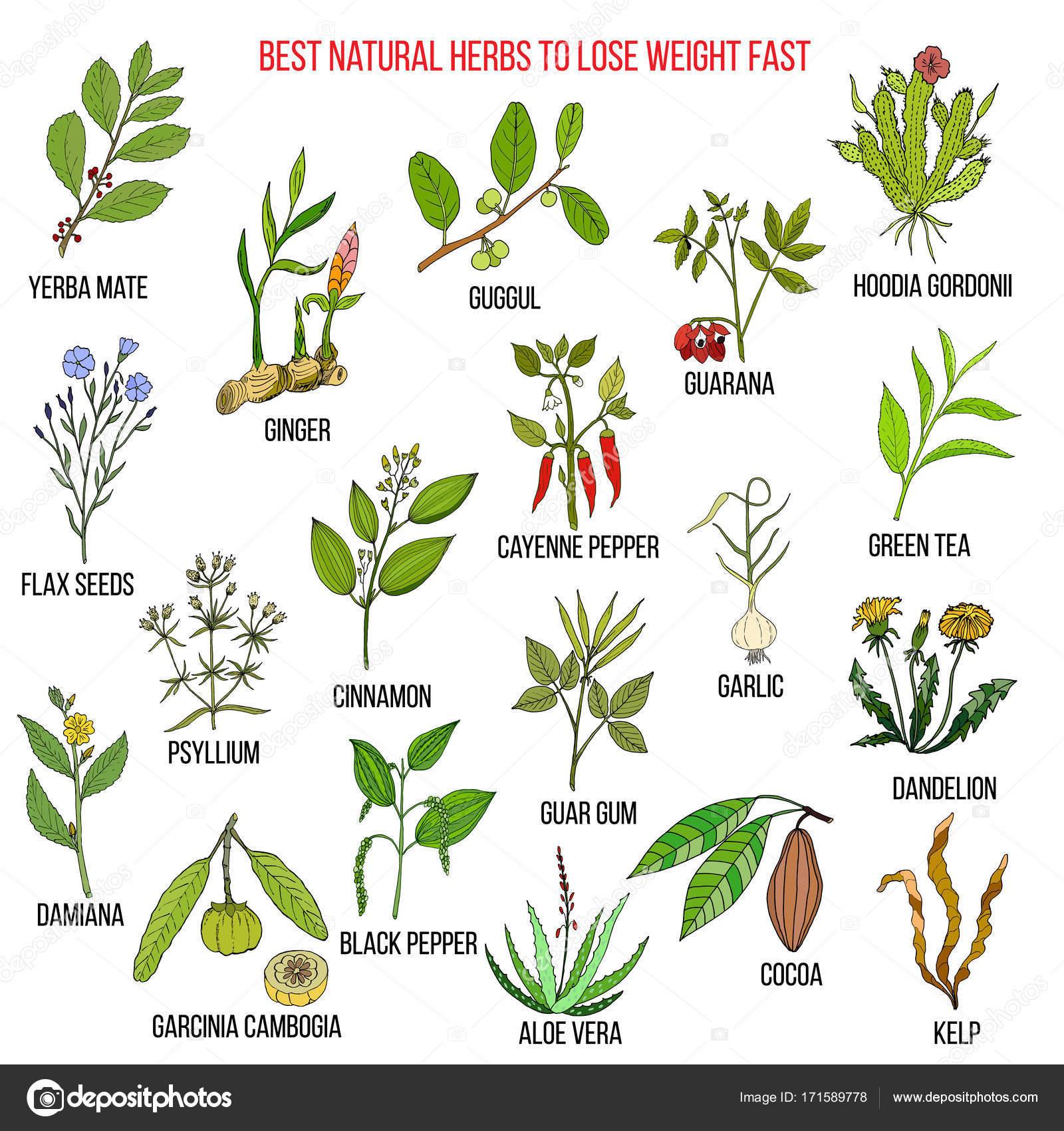 piante naturali per perdere peso