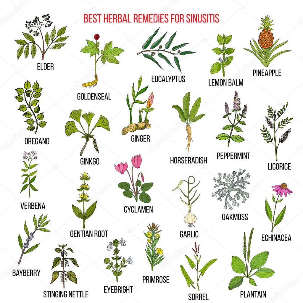 Best herbal remedies for sinusitis