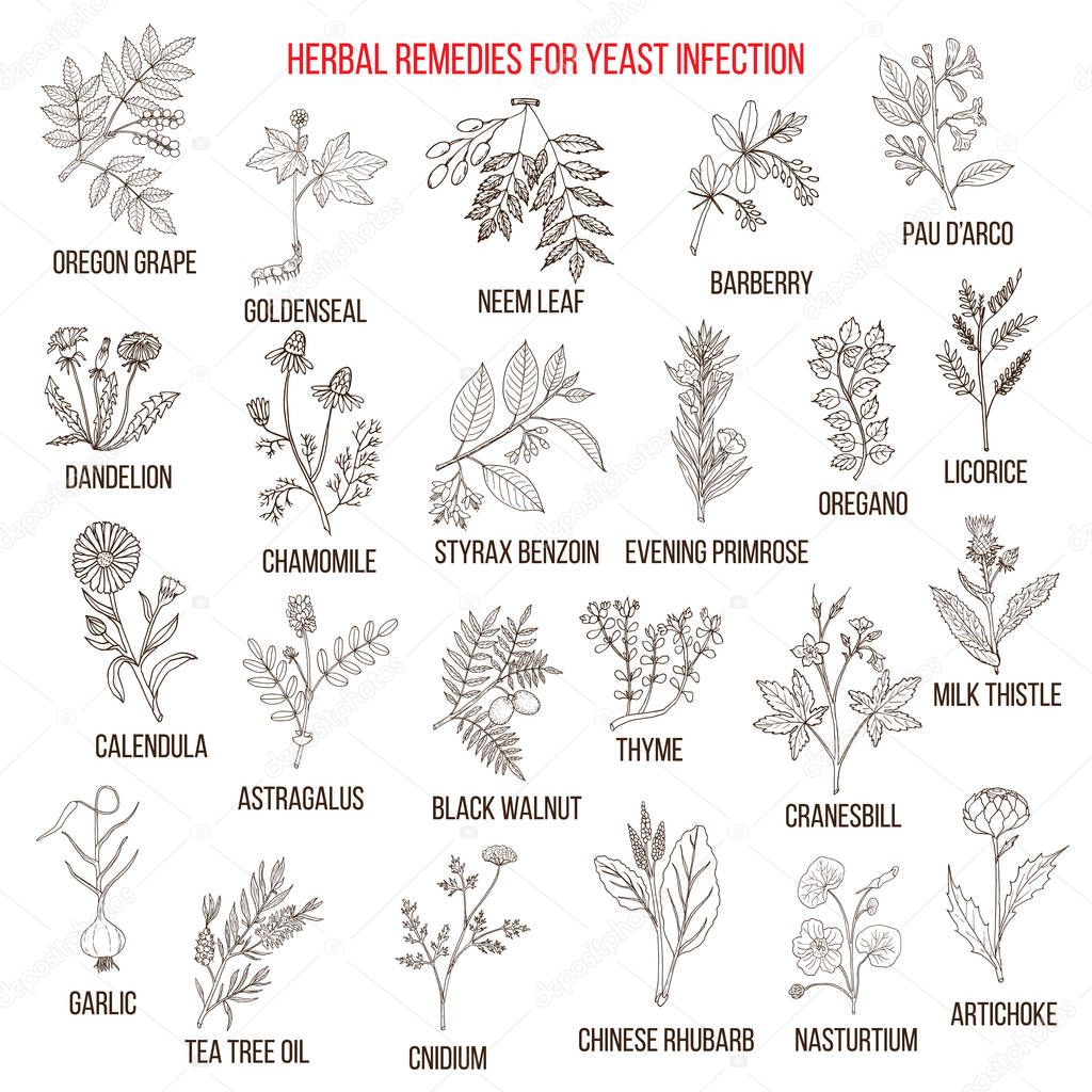 Best herbal remedies for yeast infection