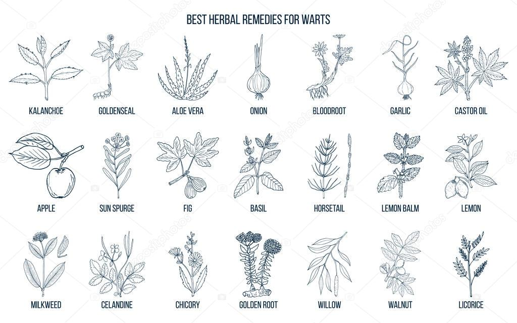 Best herbal remedies to treat warts