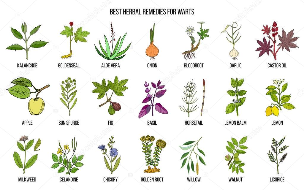 Best herbal remedies to treat warts