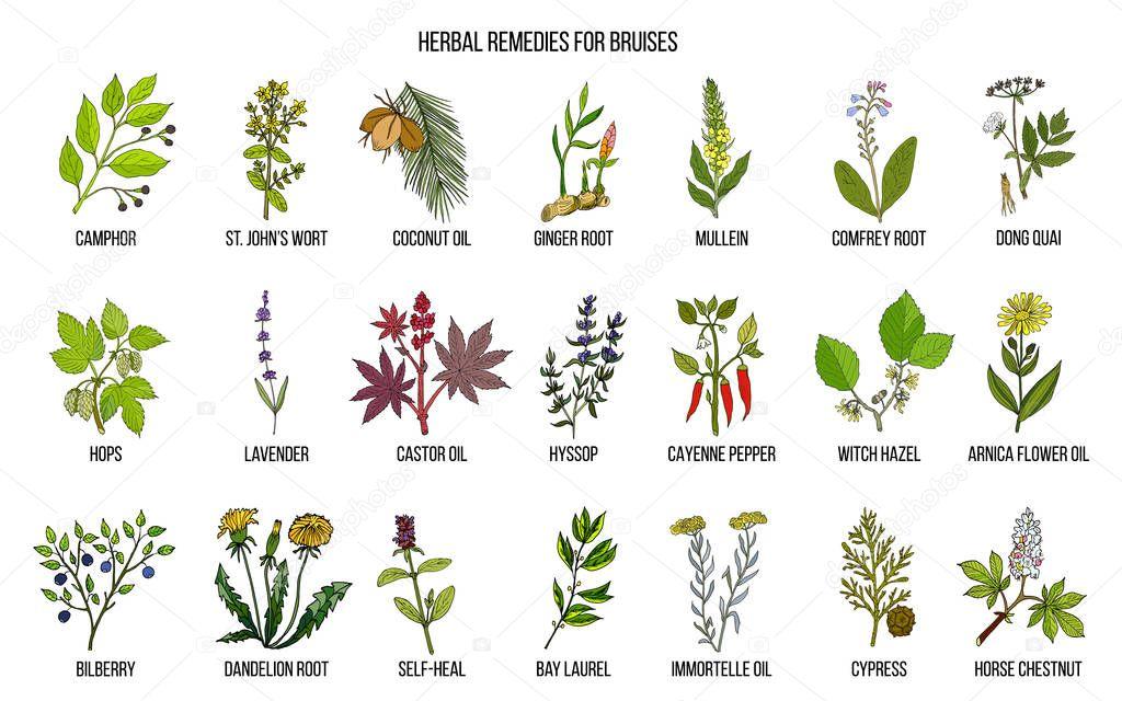 Best herbal remedies to treat bruises