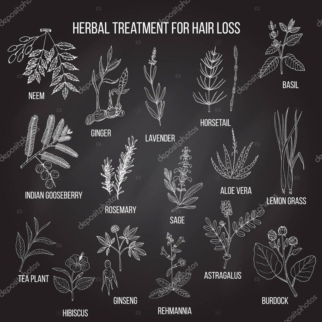 Medicinal herbs for hair loss treatment.