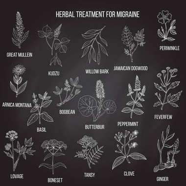 Collection of medicinal herbs for migraines relief.