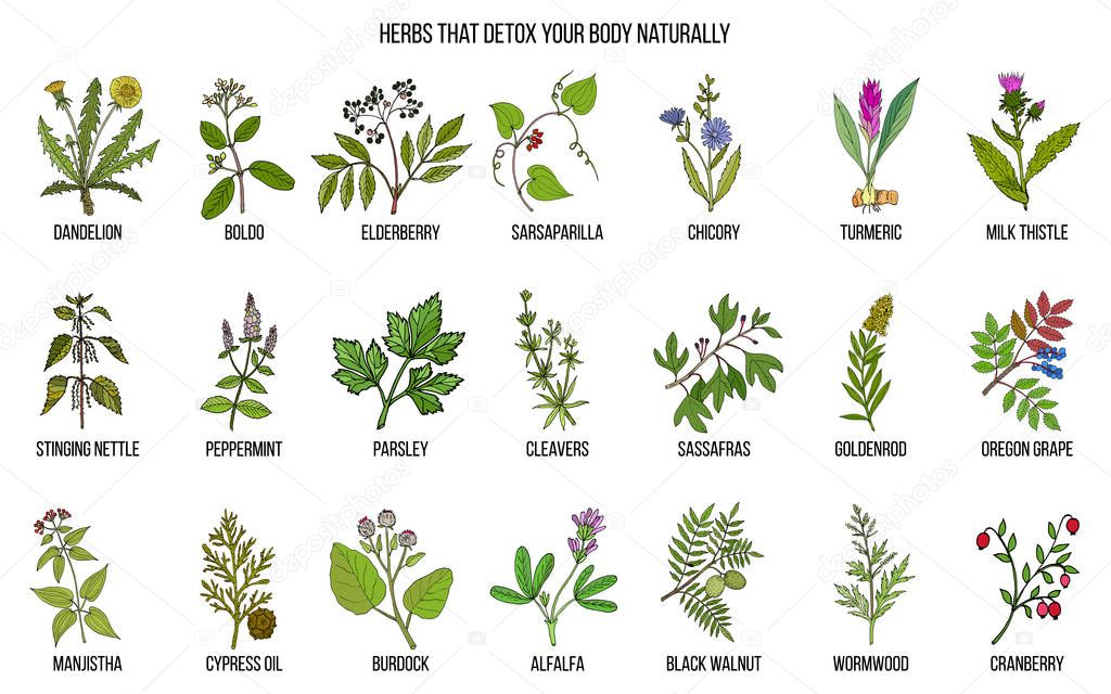 Best herbs for body detox