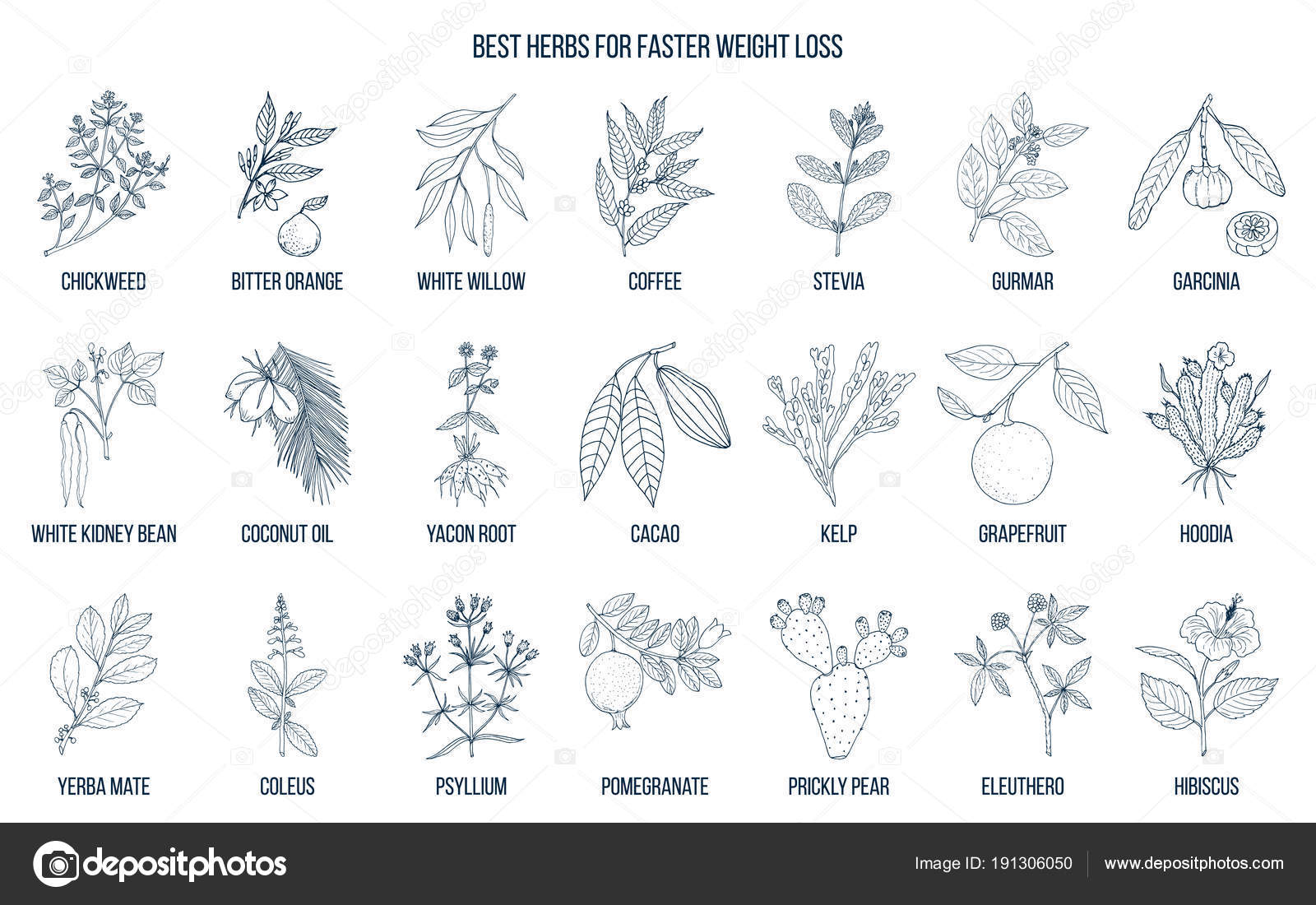 Plantas naturales para bajar de peso