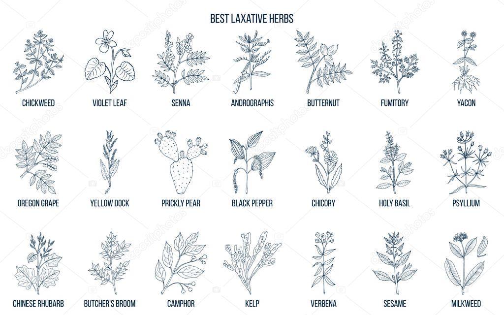 Best laxative herbs
