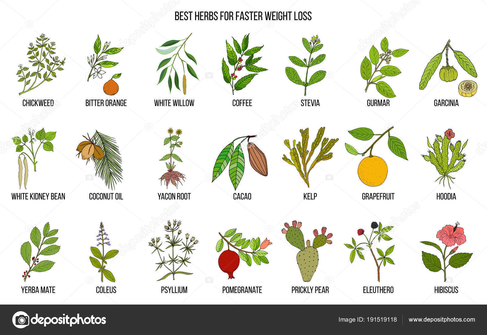 hierbas para bajar de peso