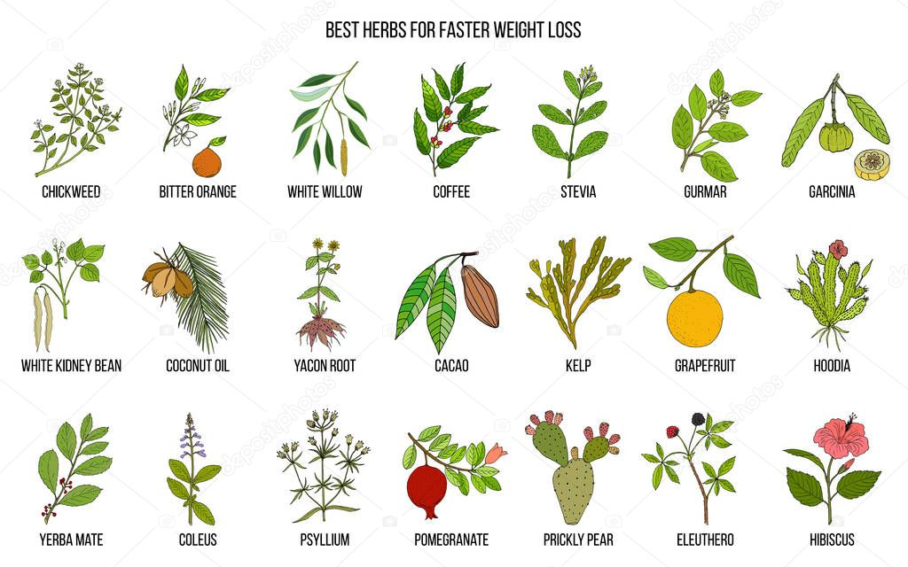 Best natural herbs for fast weight loss