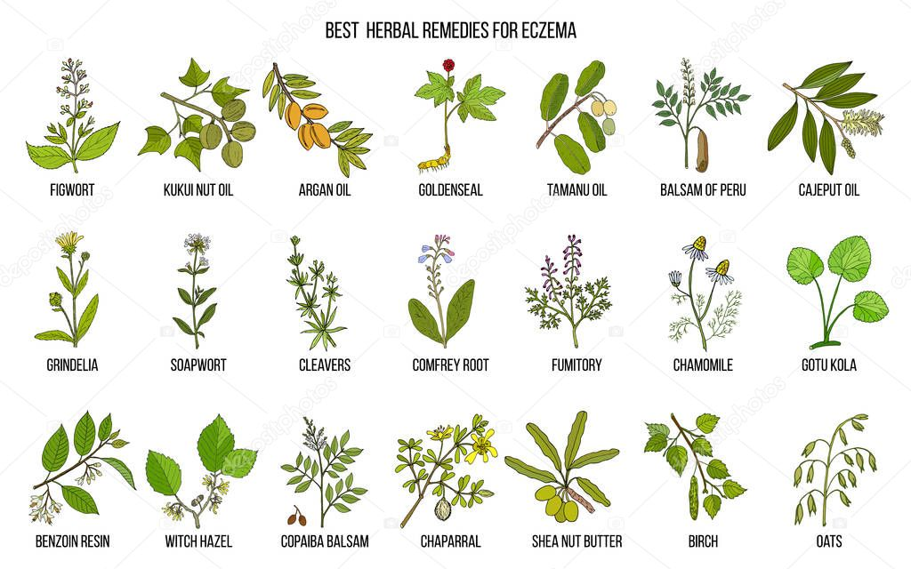 Best medicinal herbs for eczema.