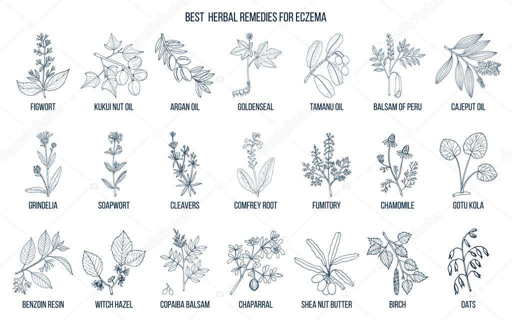 Best medicinal herbs for eczema.