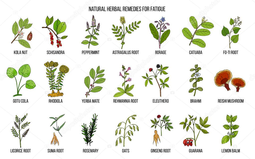 Best medicinal herbs for chronic fatigue