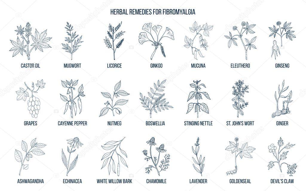 Best medicinal herbs for fibromyalgia