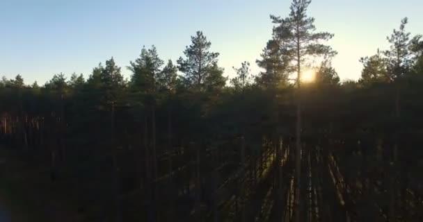 Letecký pohled na slunce nad stromy v borovém lese při západu slunce