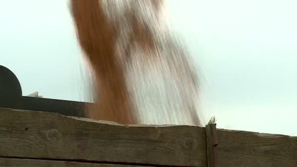 sklizeň pšenice zpracování obilí velké