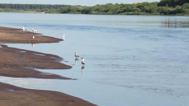 odpočinek na řece beach racky volejbal lidi opalovat se rybáři na rekreační člun loď