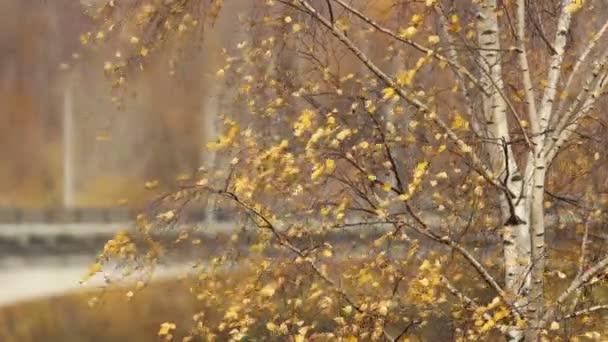 az emberek sárga leveleket sétálnak galambok és kutyák egy ősszel Napos nap a parkban