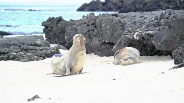 Lachtan, procházky po pláži