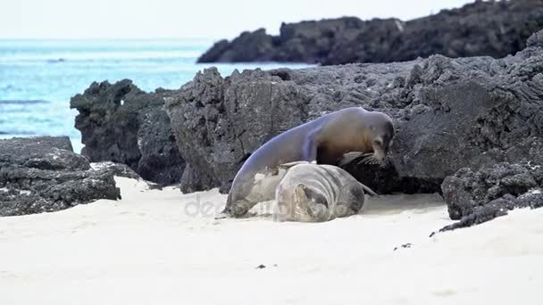 Sea Lions climbing on top of each other