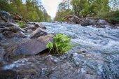 Fotografie Rasen Sie in einem idyllischen Fluss mit Steinen und Bäumen im Hintergrund