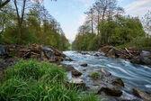 Fotografie Langzeitbelichtung von einem schwimmenden, idyllischen Fluss mit Steinen und Gräsern im Vordergrund