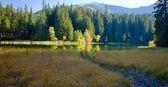 Fotografie Ostrov se stromy v podzimních barvách s pozadím Chopok. Jezeru Vrbicke v Demänovské doliny na Slovensku