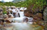 Voda horské řeky s kamením a Borovice zakrslá poblíž vodopád Skok ve Vysokých Tatrách. Krásné Slovensko