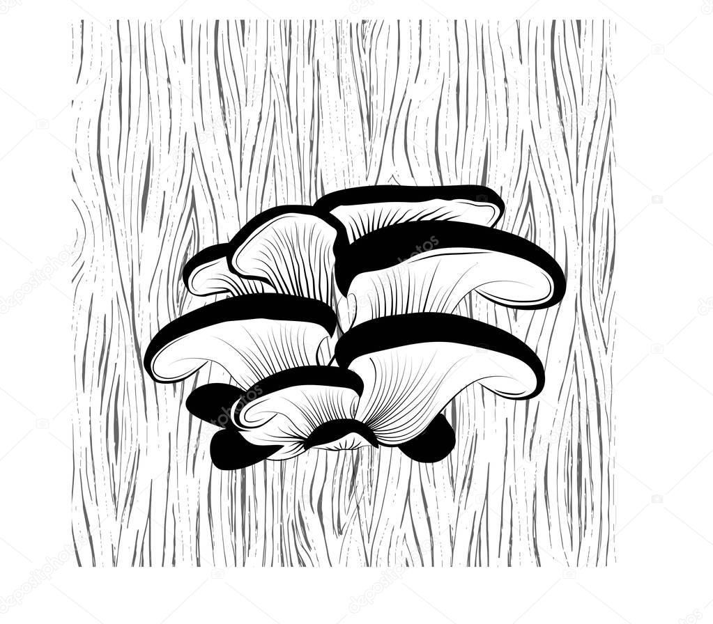 Oyster mushrooms on the tree