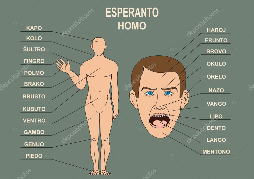 The Manual For The Study Of The Language Esperanto The Human Body