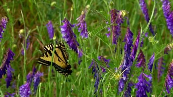 lila virágok gyönyörű pillangó
