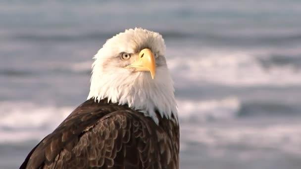Közelkép a bald eagle, a tenger a háttérben