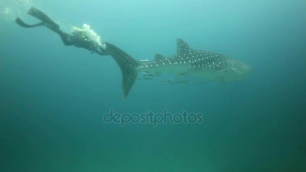 Taucher schwimmt neben Shar und macht Fotos