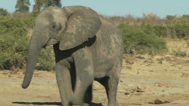 elefánt-a baba