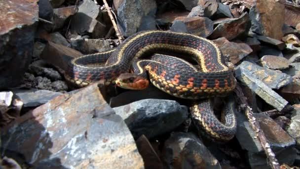 podvazek had stočený na skalách