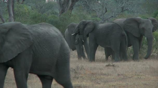Skupina sloni oddálit