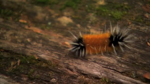 Moving caterpillar along log bark