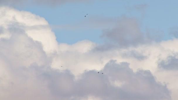 Raben und kahle Adler, die in einem wolkigen Himmel