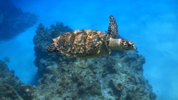 tengeri teknőst úszni múlt búvár