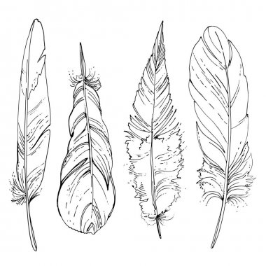 Set of ornamental feathers.