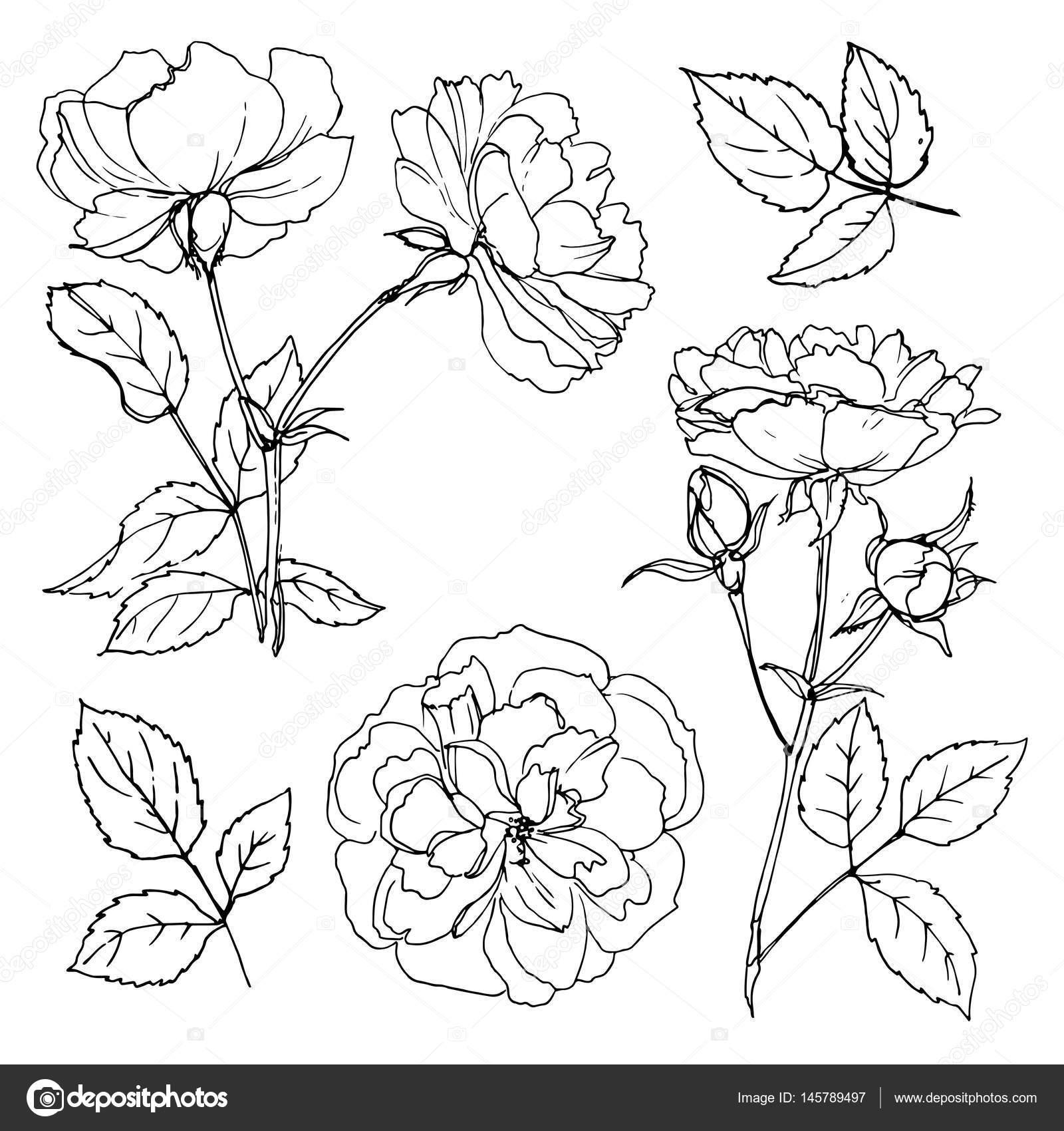 Bei fiori disegnati a mano vettoriali stock vaneevais for Fiori disegnati
