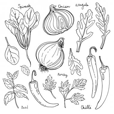 hand-drawn spices set