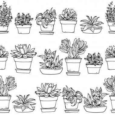 succulents in flower pots