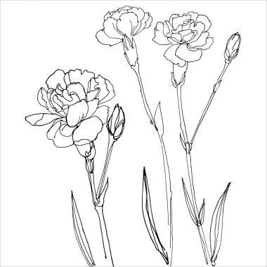 hand-drawn carnation flowers