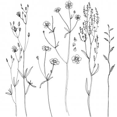 hand-drawn herbs set