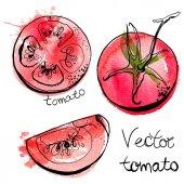 ručně kreslené akvarel rajčata