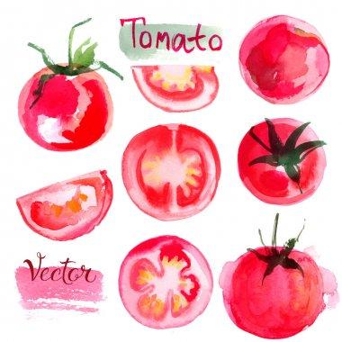 hand-drawn watercolor tomatoes set