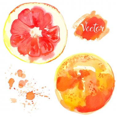 hand-drawn watercolor grapefruit