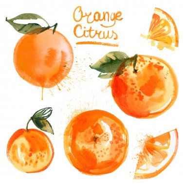 hand-drawn orange citrus set